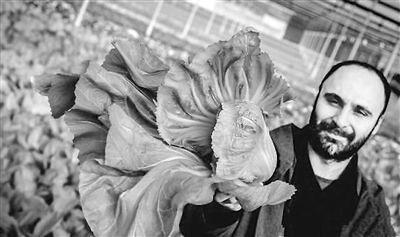 转帖:中国蔬菜火爆西班牙 给华人种菜成为新兴行业 - amen1523 - 雨山诗画