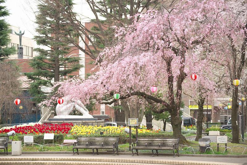 荒川区役所の桜 2016年3月28日