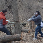 Cutting invasive trees