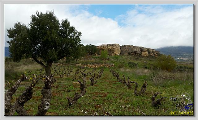 Ruta del Vino en La Rioja Alta (10)