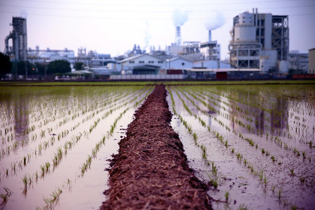 """高雄仁武 稻田 工廠 Kaohsiung 看到自己早期的作品,在第一份工作上台北前也是在高雄到處走走拍拍,很多時候其實也就習慣這樣一個人走來走去,所以現在想想也不用太過詫異現況。  遠方是台塑仁武廠,故意來到周圍的稻田把工廠放在背景後方,那時候剛買 Canon 6D。  <a href=""""http://pi.isuphoto.org/post/1202"""" rel=""""noreferrer nofollow"""">pi.isuphoto.org/post/1202</a>  Canon 6D Sigma 28-70mm f/2.8 EX DG 2013-01-04  Photo by Toomore"""