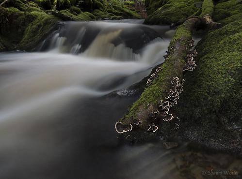longexposure plant green nature water wales river waterfall moss stream colours place unitedkingdom decay cymru rapids fungi ceredigion slowexposure bracketfungi neutraldensity shawnwhite nantgau pontrhydygroes canon6d hafodestate