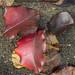Apple leaves by Dan Brekke