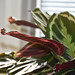 kitchen plant and a bokeh too by Dotsy McCurly
