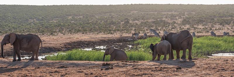 Elefanten und Zebras am Hapoor Dam