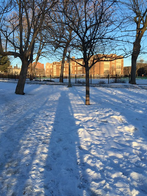 Long Shadows on a Sunny Afternoon