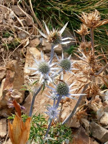 moundeilhs -septembre 2011 070