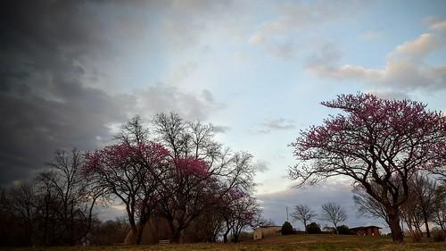 bartlesville soonerpark sunset galaxys6 spring cloudsstormssunsetssunrises treepainting redbud