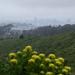 San-Bruno-Mountain 2016-04-10