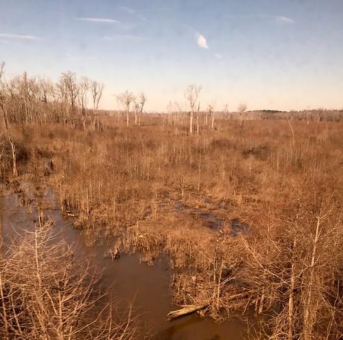 southcarolina nationalforests amtrakviews swampsandmarshes