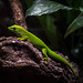 Salamander im Zoo Salzburg #lizard #photoofthedaychallange #photoof theday #natgeo #makro #Austria #natgeoanimal #lizardphoto