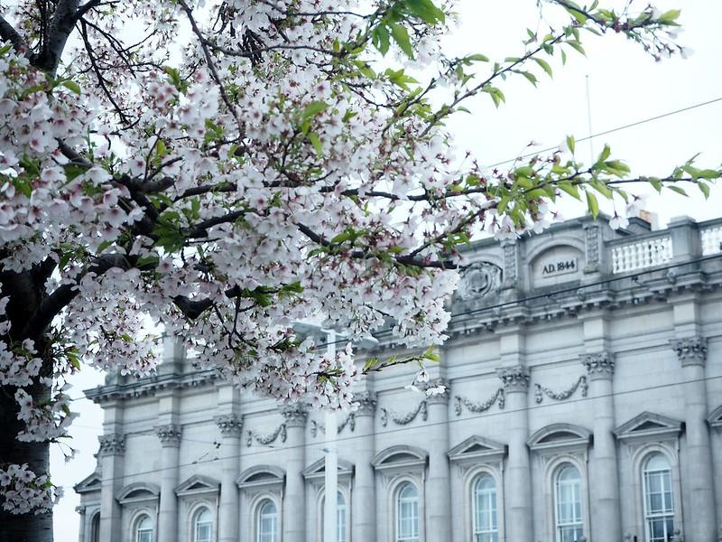 dublinP4150249, ireland, irlanti, dublin, europe, eurooppa, matkustaa, travel, travelling, matkat, yksin matkustus, kokemukset, vinkit, ideas, tips, experiments, travelling alone, travel guide, quide, cherry blossom, kirsikankukat, arkkitehtuuri, kirsikankukkapuut,