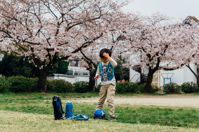 CherryBlossoms_101