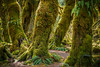 Hall of Mosses