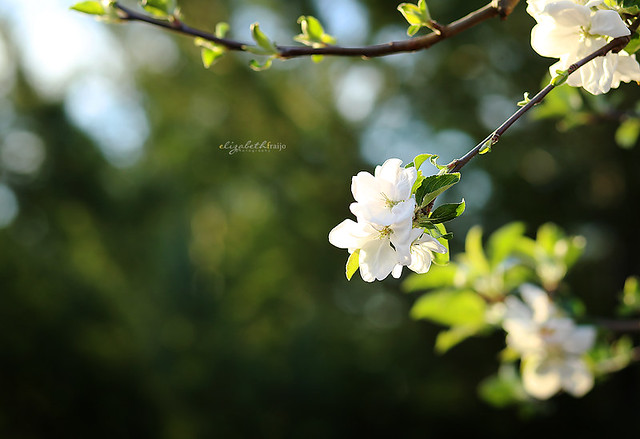 Spring04W