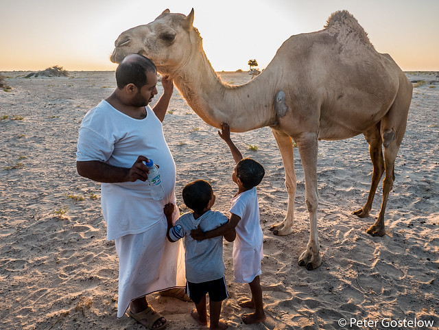 Bedu and their camel