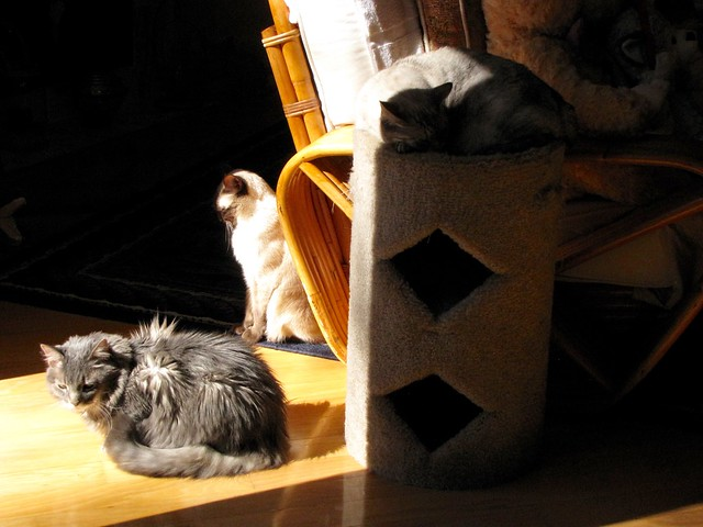 Chasing Sunbeams