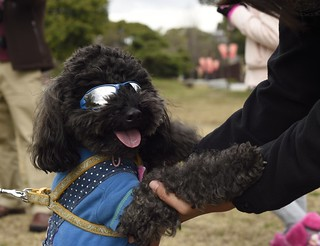 תמונה של Osaka Castle Park ליד Ōsaka-shi. dog sunglasses fashion japan cool outdoor shades