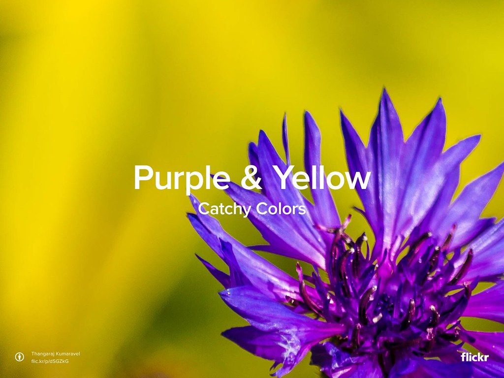 Catchy Colors: Purple & Yellow