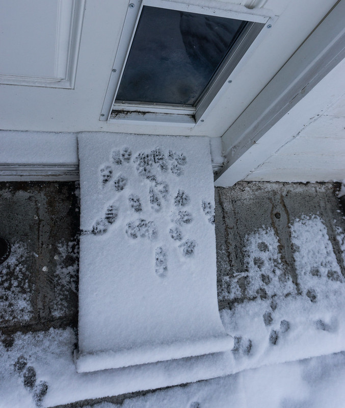 Dog Footprints in Snow