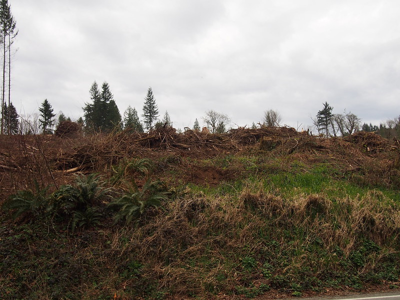 Clearcut: Last time I was out there, this hillside was covered with trees.
