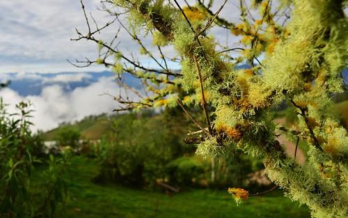 desktop peru southamerica landscape lichens bucholic levanto featured northernandes yalape chachapoyasdistrict