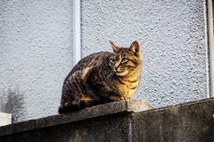 Today's Cat@2016-04-20