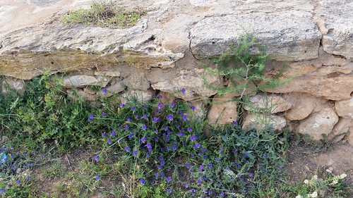 25959152824 1d1b303b10 Tag 6, Cuevas del Drach
