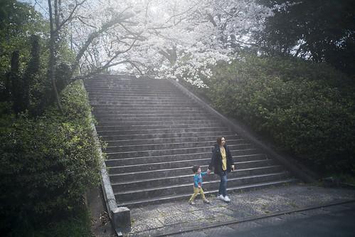 JG C3 30 025 福岡市中央区||西公園 / Sony α7RII × Summaron 2.8cm F5.6