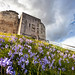 Clifford's Tower Bluebells