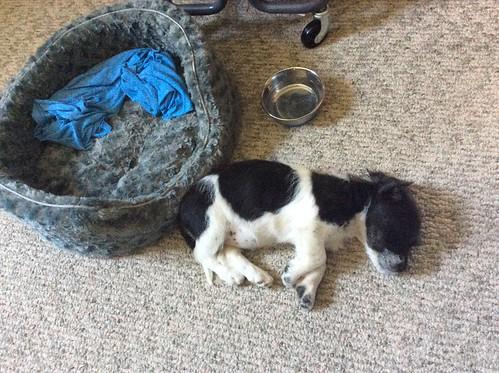 Ivy has had a big day.