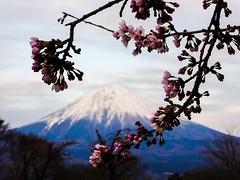 Fuji I