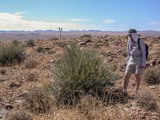Besen-Wolfsmilch auf der Wanderung am Canyon Village