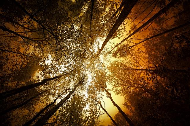 The Light fom Above
