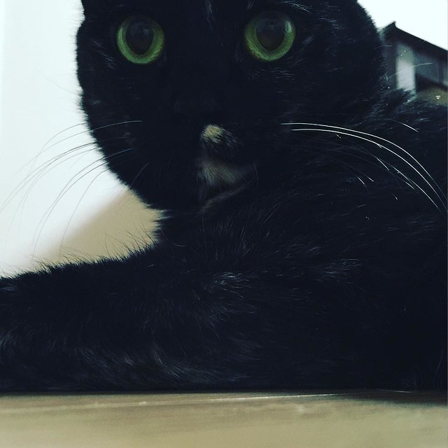 目まんまる😳😳😳 #cat #cats #catsofinstagram #catstagram #instacat #instagramcats #neko #nekostagram #猫 #ねこ #ネコ# #ネコ部 #猫部 #ぬこ #にゃんこ #ふわもこ部