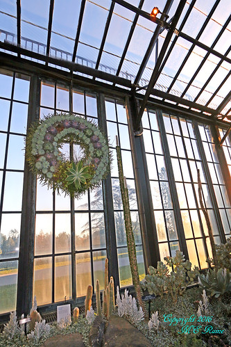 2015 Longwood Christmas: Conservatory Silver Room Desert Plants for the Holidays (3 of 4) at Longwood Gardens in Kennett Square PA