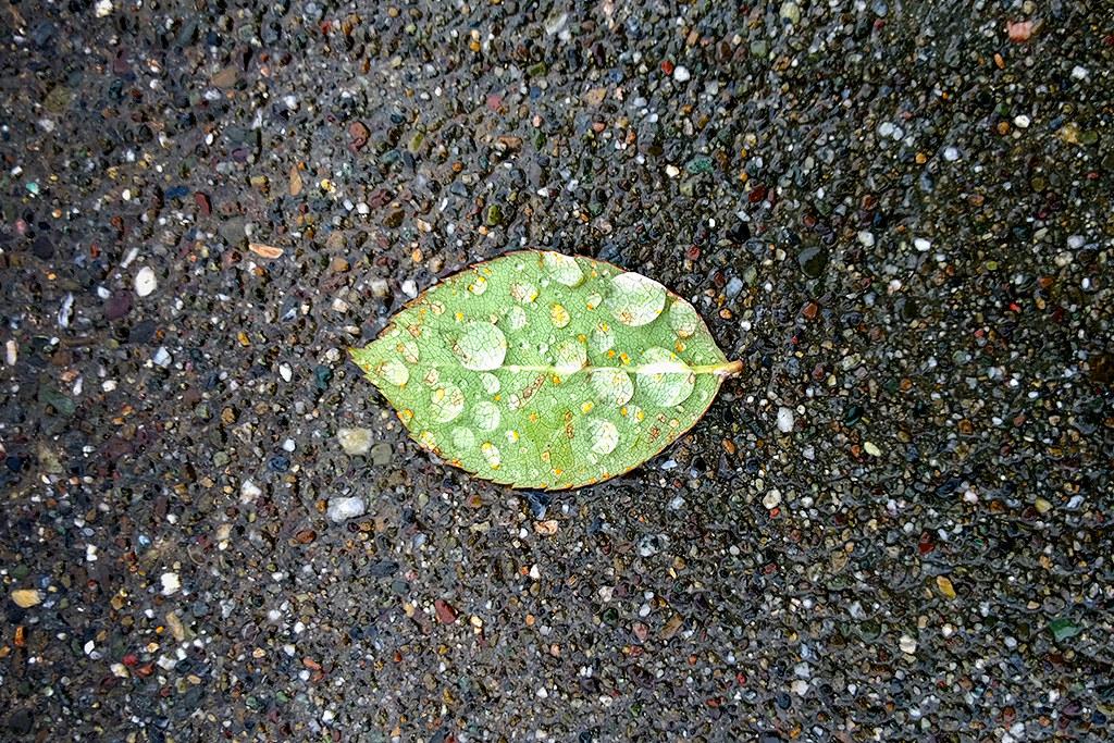 Wet_leaf