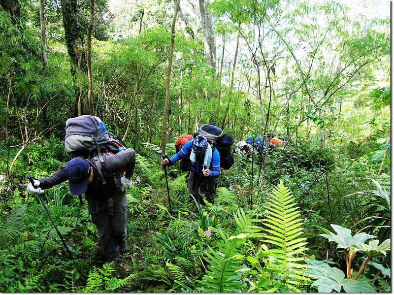 斯拉巴庫山登山途中景觀 3