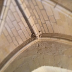 Souriez, vous êtes surveillés ! Petit modillon (?) rieur en forme de griffon à la croisée d'ogives à l'Abbaye de @fontdouce  #CharenteMaritime #patrimoine #abbaye #architecture