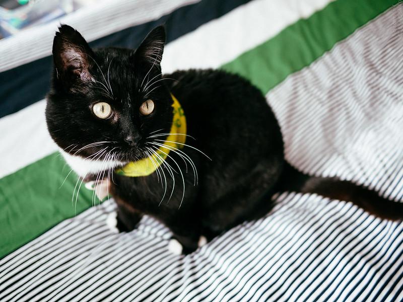 Catcloth