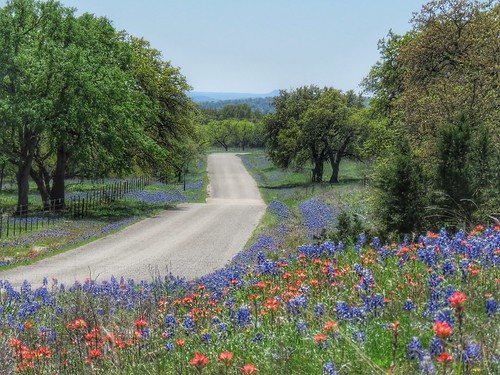 road landscape spring texas country scenic peaceful serene wildflowers hillcountry bluebonnets llano countryroads texaswildflowers texashillcountry texasspring