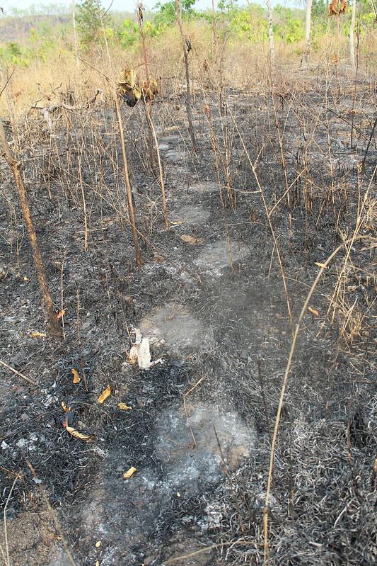 Wild elephant habitat close to Buon Don