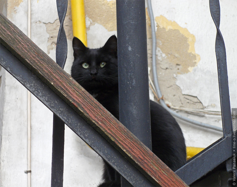 20160403_lutsk_cat_002
