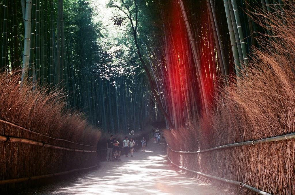 嵐山 竹林 京都 Arashiyama Kyoto, Japan / AGFA VISTAPlus / Nikon FM2 2015/09/28 後來我走進來竹林,周圍很多人,想要等一個沒有太多人的場景要等很久,那時候應該要早一點來的,雖然買了鏡頭之後就快快的坐車來這邊。  我記得那天天氣很好,陽光有點強,這裡我拍的很沒把握,因為光線的反差太大了,我抓不出個感覺來。  那時候我坐在地上等了好像 30 多分鐘,想等一個我理想的淨空的畫面。  沒想到我竟然等到認識的人!那時候一直在日本其實朋友都不意外,意外的是竟然還真的能遇到我,然後回台灣竟然成為在日本能遇到我的話題。  其實那時候我真的好感激能遇到你們,我才能短暫的跳出我的框框外。  Nikon FM2 Nikon AI AF Nikkor 35mm F/2D AGFA VISTAPlus ISO400 0990-0002 Photo by Toomore