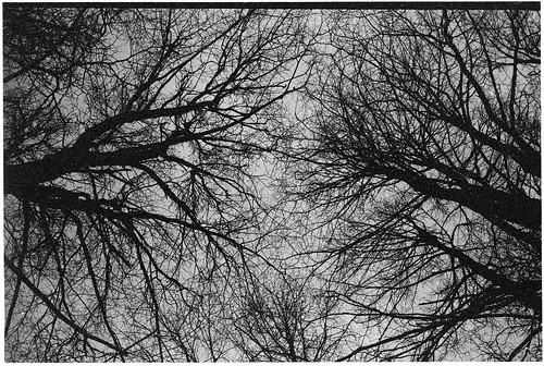 zorki sky bw abstract film nature forest branch branches d76 network lime ilford fp4 plexus zorki6 tiliacordata om2n tauragnai šinkūnai
