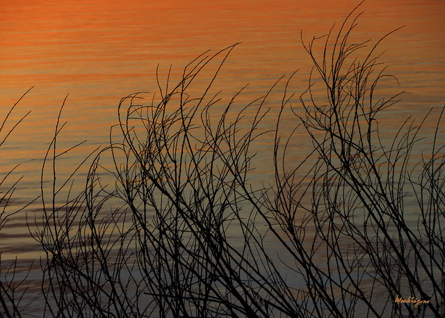 Reeds - Roseaux