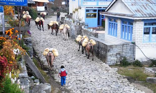 54 Circuito Annapurnas (56)