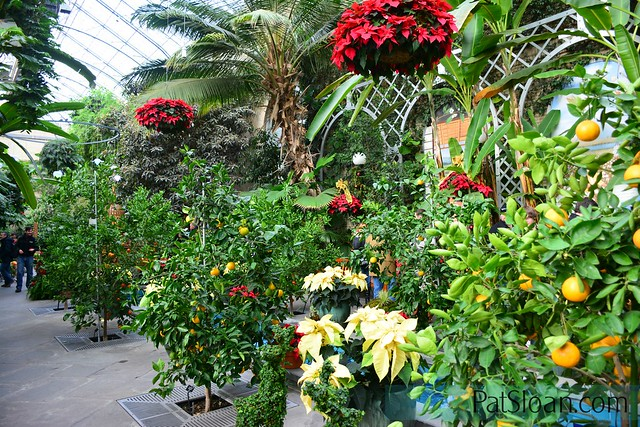 pat sloan DC Botanic garden inside