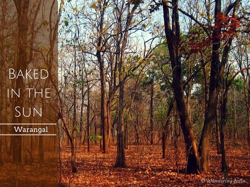 Eturnagaram Wildlife Sanctuary, Warangal