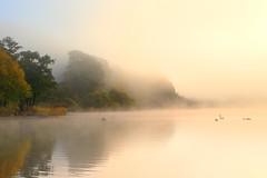 Lakeland Mists